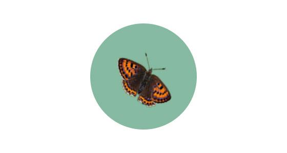 Farfalle poliedriche | Schock